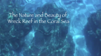 Nature and Beauty of Wreck Reef in the Coral Sea